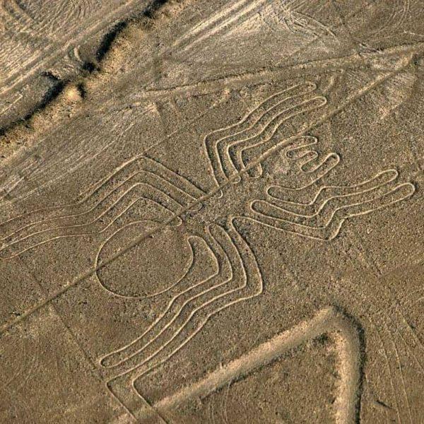 Nazca - Spider (2)